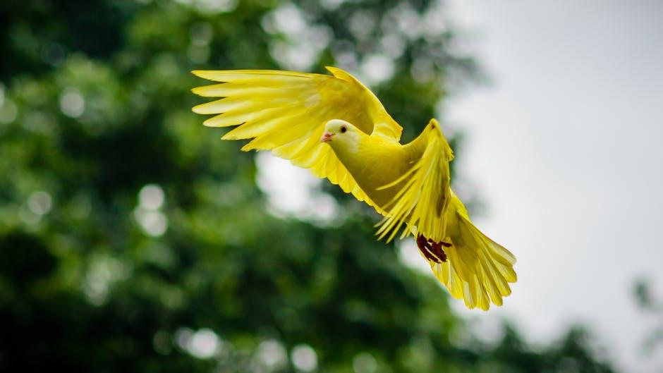 fellowship-of-the-holy-spirit