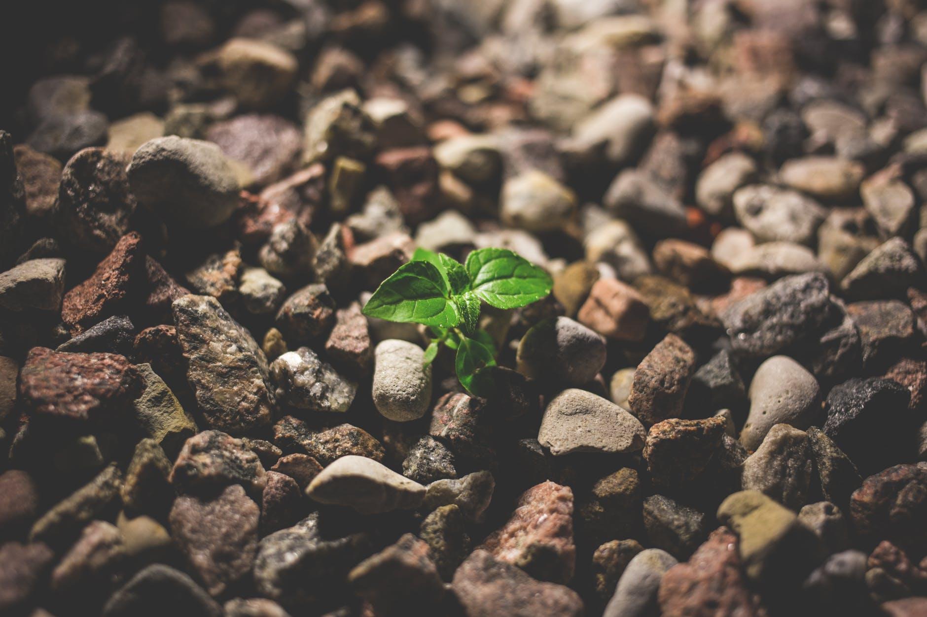 starting-small